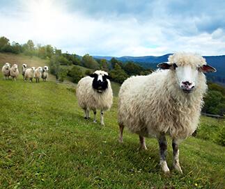 Celoroční přikrývka z ovčí vlny StříbroAktiv smetanová