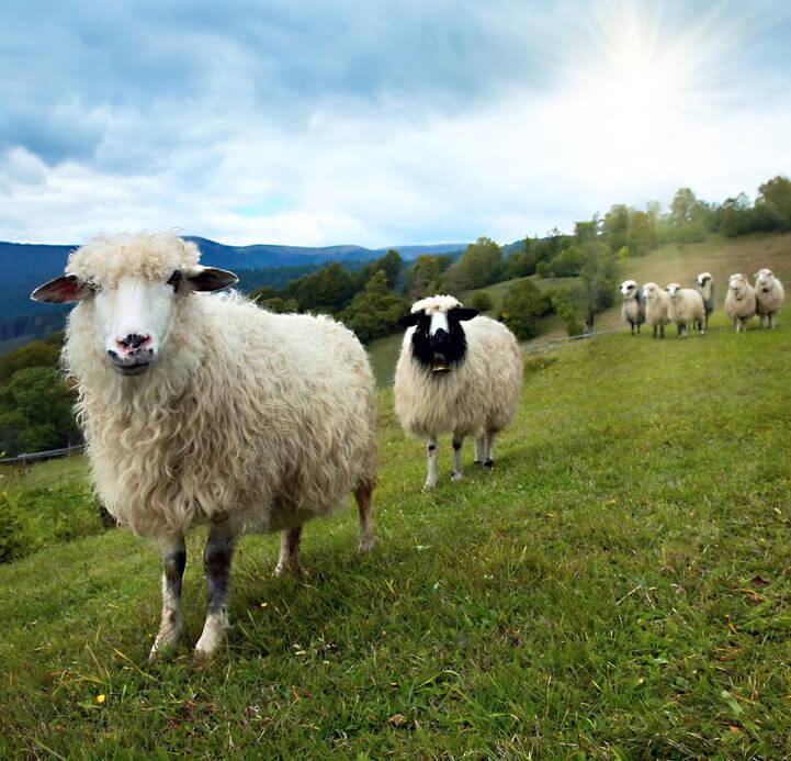 Celoroční dětská přikrývka z ovčí vlny Stříbroaktiv smetanová