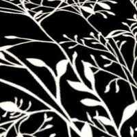 Bavlna větve na černém podkladu 9343-11
